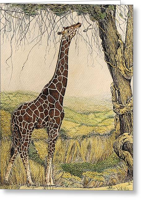 Pen And Ink Framed Prints Paintings Greeting Cards - Giraffe in the Trees Greeting Card by Charles Berry