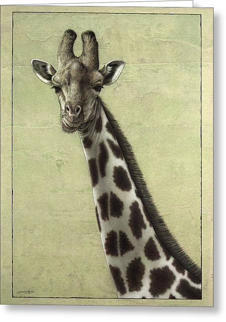 African Drawings Greeting Cards - Giraffe Greeting Card by James W Johnson