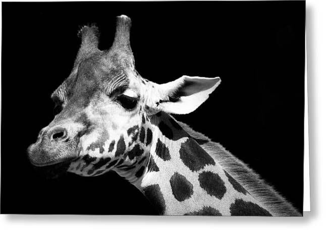 Portrait Photography Greeting Cards - Portrait of Giraffe in black and white Greeting Card by Lukas Holas