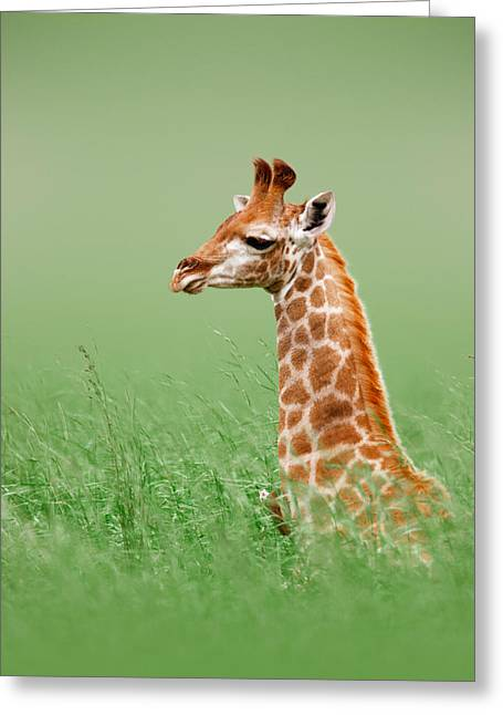 Flats Greeting Cards - Giraffe lying in grass Greeting Card by Johan Swanepoel