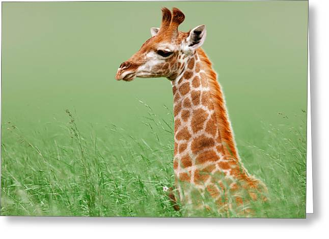 National Greeting Cards - Giraffe lying in grass Greeting Card by Johan Swanepoel