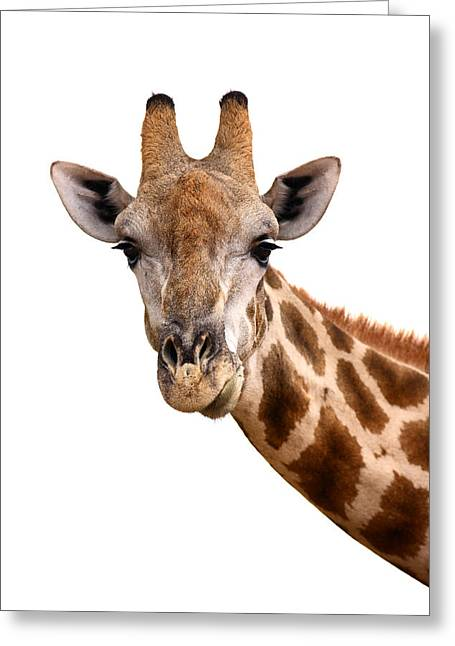 Cutout Photographs Greeting Cards - Giraffe portrait Greeting Card by Johan Swanepoel