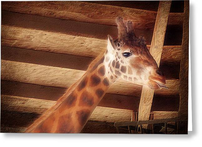 Melanie Lankford Photography Greeting Cards - Giraffe Smarty Greeting Card by Melanie Lankford Photography