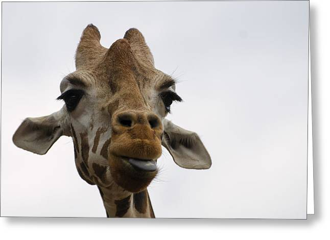 Animal Pics Greeting Cards - Giraffe sticking out tongue Greeting Card by Chris Flees