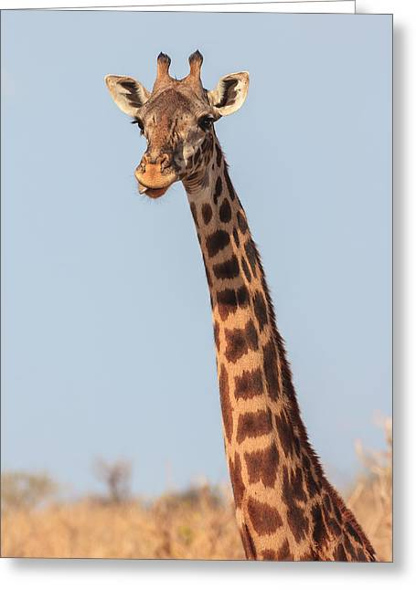 Craters Greeting Cards - Giraffe Tongue Greeting Card by Adam Romanowicz