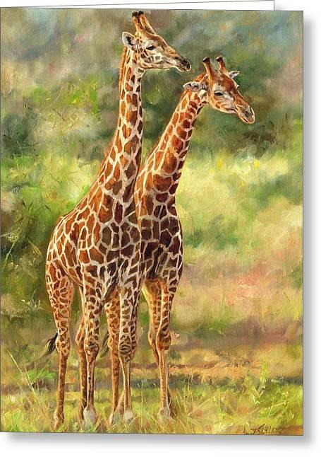 David Greeting Cards - Giraffes Greeting Card by David Stribbling