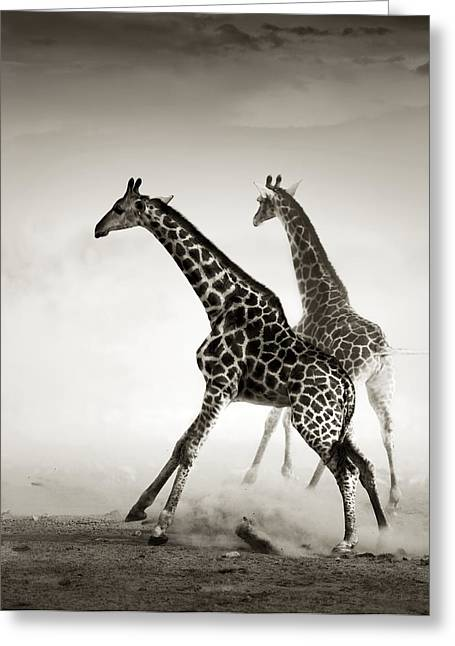 Energetic Greeting Cards - Giraffes fleeing Greeting Card by Johan Swanepoel