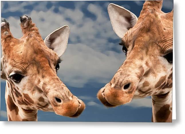 Giraffes In Love Greeting Card by Christine Sponchia