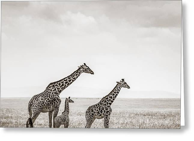 Tiere Greeting Cards - Giraffes Masai Mara Kenya Greeting Card by Regina Mueller
