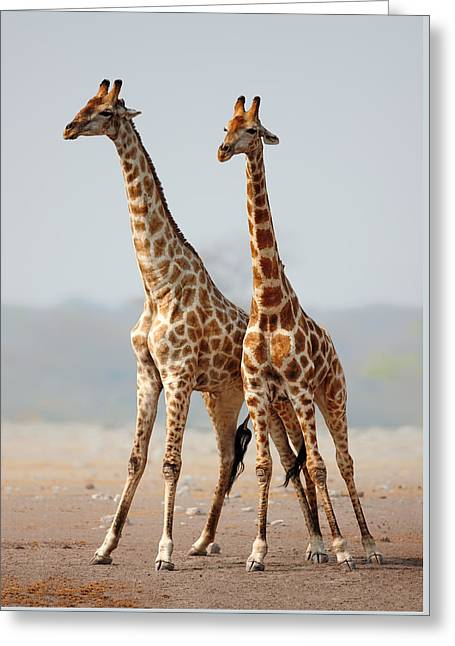 Etosha Greeting Cards - Giraffes standing together Greeting Card by Johan Swanepoel