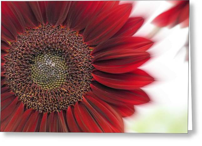 Sunflower Patch Greeting Cards - Girasol Greeting Card by Lou Sisneros