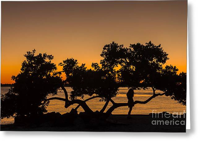 Surf Silhouette Greeting Cards - Girl and Tree Greeting Card by Marvin Spates
