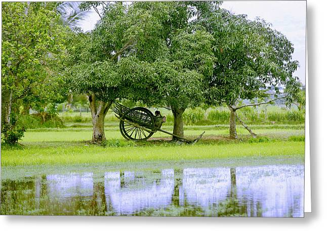 Mango Greeting Cards - Girl in an Oxcart Greeting Card by Peter Oxley