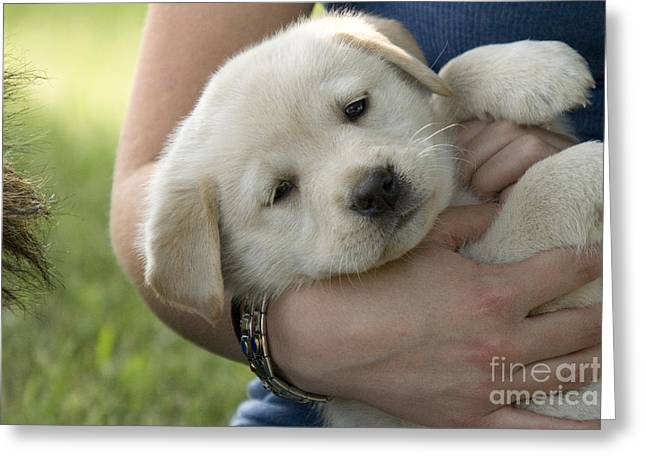 Girl With Yellow Labrador Retriever Greeting Card by Linda Freshwaters Arndt