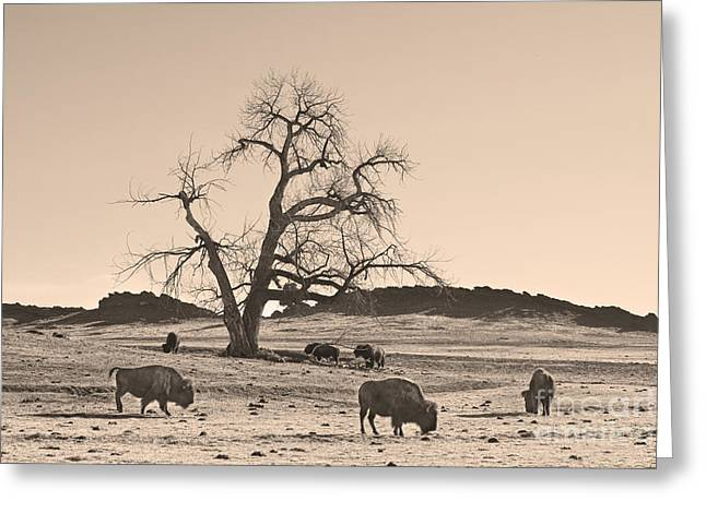 Wildlife Art Acrylic Prints Greeting Cards - Give Me A Home Where The Buffalo Roam Sepia Greeting Card by James BO  Insogna