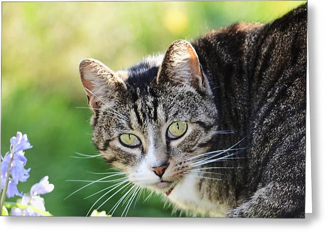 Cat Prints Photographs Greeting Cards - Gizmo 2 Greeting Card by Sharon Lisa Clarke