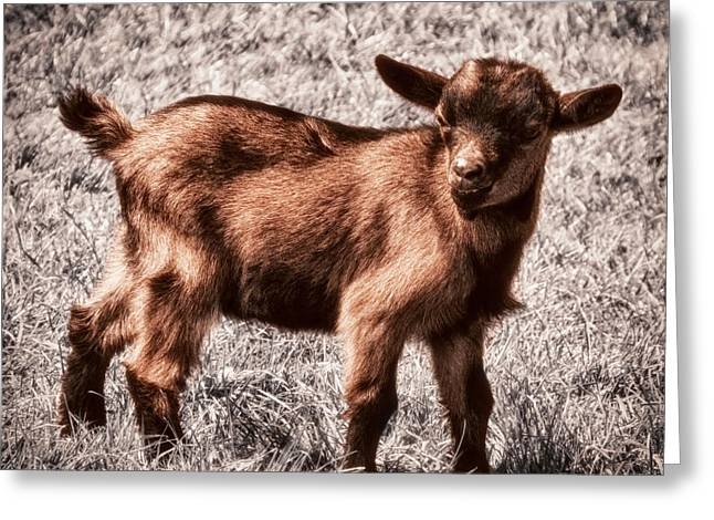 Innocence Greeting Cards - Gizmo Greeting Card by Wim Lanclus
