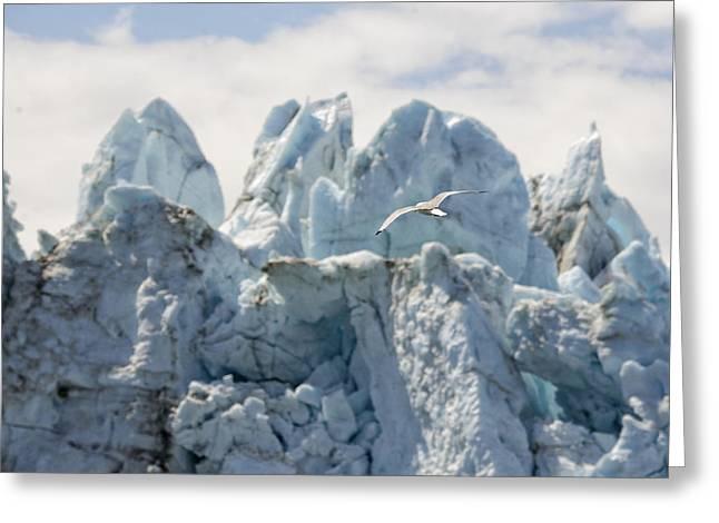 Glacial Flight Greeting Card by Vicki Jauron