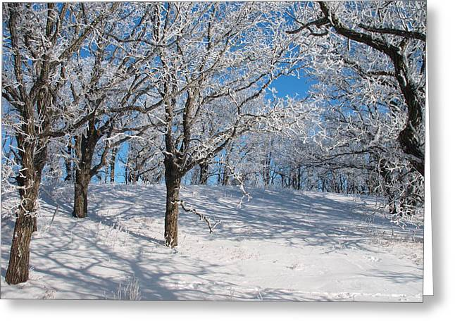 Peterson Nature Photography Greeting Cards - Glacial Frost Greeting Card by James Peterson