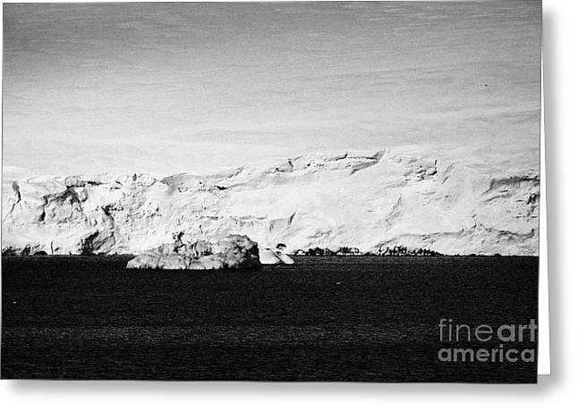 Snow-covered Landscape Photographs Greeting Cards - glacial shoreline with snow cap on anvers island and neumayer channel Antarctica Greeting Card by Joe Fox