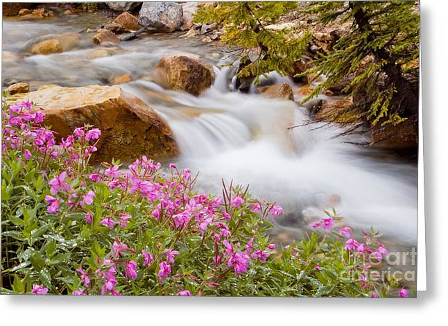 Landscapes Photographs Greeting Cards - Glacial stream with wild flowers Greeting Card by Oscar Gutierrez