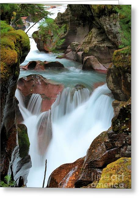 West Glacier Greeting Cards - Glacier Avalanche Creek Greeting Card by Adam Jewell