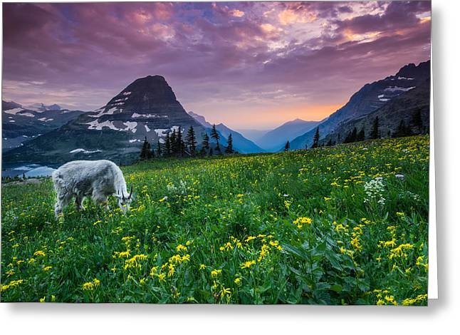 Stunning Greeting Cards - Glacier National Park 4 Greeting Card by Larry Marshall