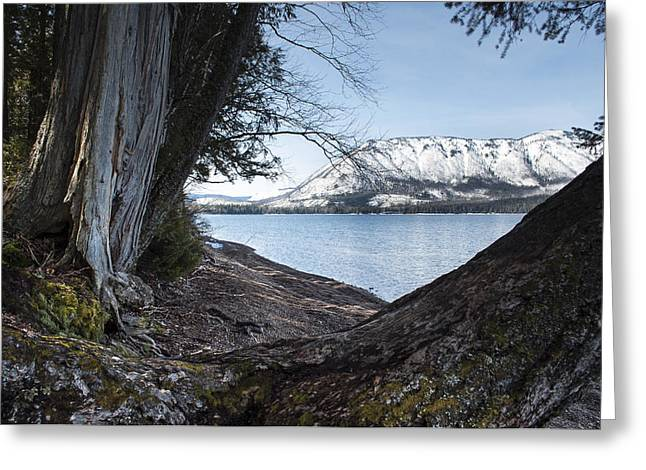 Francis Greeting Cards - Glacier Park View Greeting Card by Fran Riley