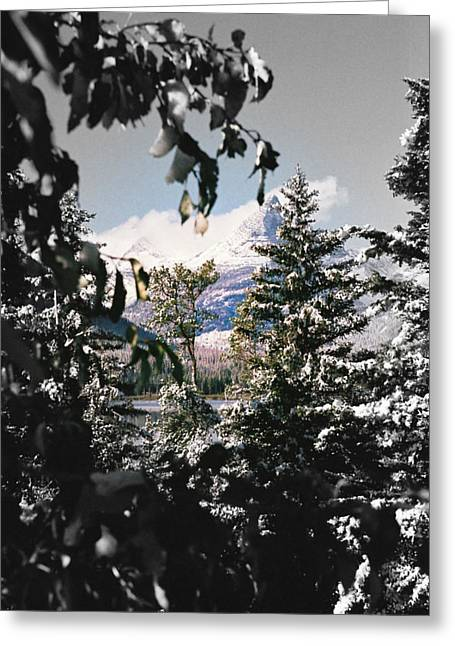 Park Scene Mixed Media Greeting Cards - Glacier Through The Trees Greeting Card by Jens Larsen