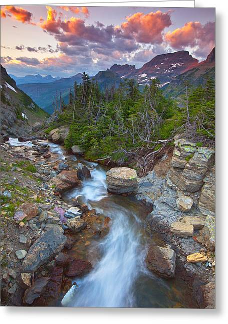 Wildlife Sunset Greeting Cards - Glaciers Wild Greeting Card by Darren  White