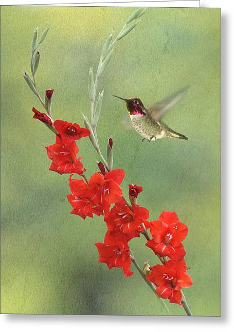 Hovering Greeting Cards - Glad Hummingbird Greeting Card by Angie Vogel