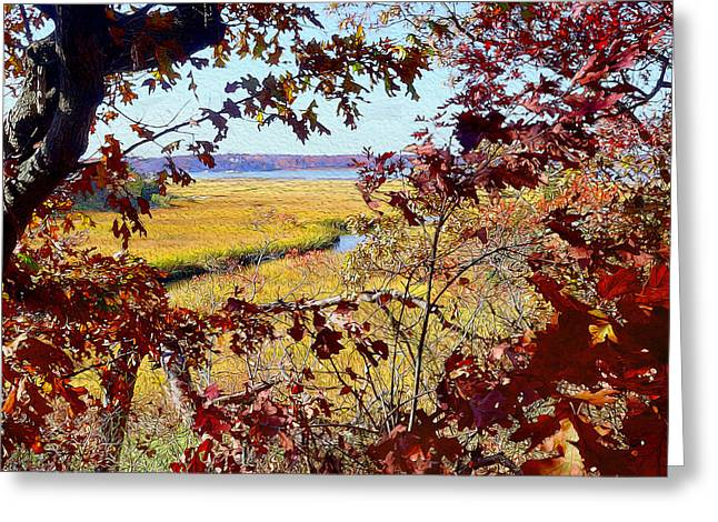 Cohasset Greeting Cards - Glades Greeting Card by Carol Sutherland