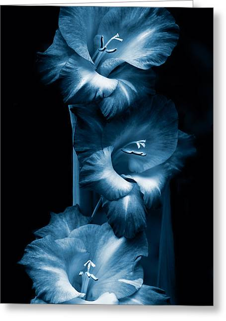 Gladiolas Greeting Cards - Gladiola Flowers Evening Light in Blue Greeting Card by Jennie Marie Schell