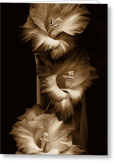 Gladiolas Greeting Cards - Gladiola Flowers Evening Light in Sepia Greeting Card by Jennie Marie Schell