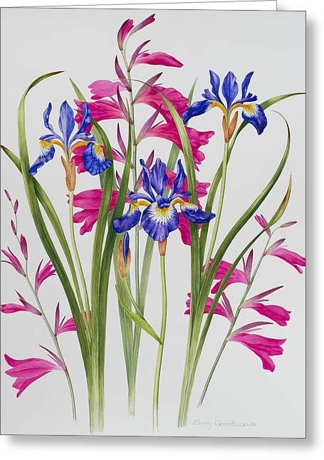 Gladiolus Greeting Cards - Gladiolus and Iris Sibirica Greeting Card by Sally Crosthwaite
