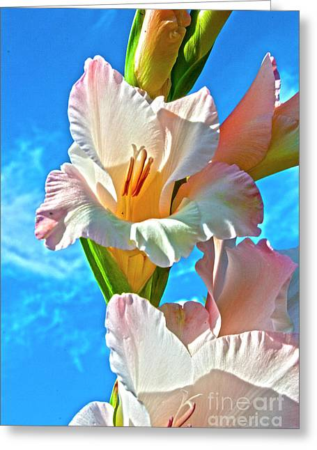 Heiko Koehrer-wagner Greeting Cards - Gladiolus Greeting Card by Heiko Koehrer-Wagner