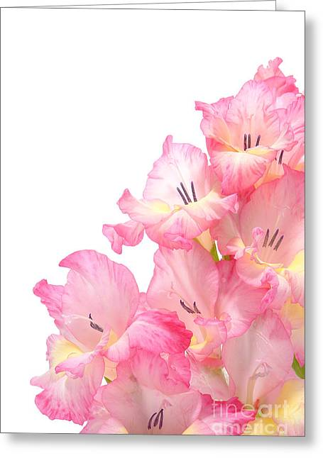 Gladiolus Greeting Cards - Gladiolus Greeting Card by Olivier Le Queinec