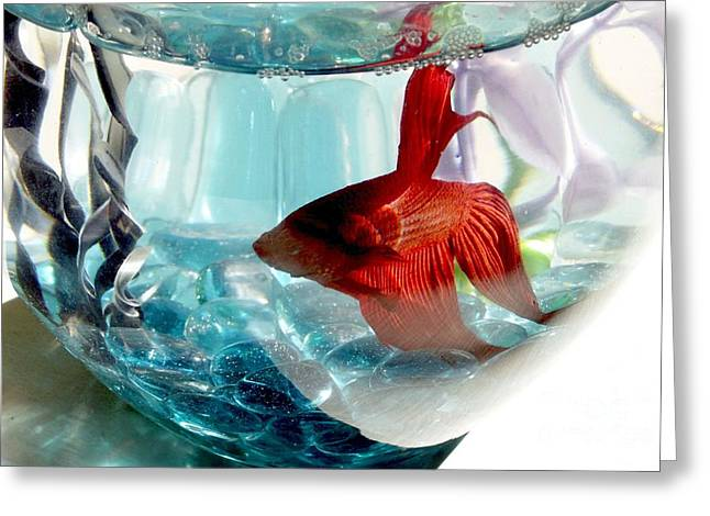 Betta Greeting Cards - Glamor Rudy Greeting Card by Valerie Reeves
