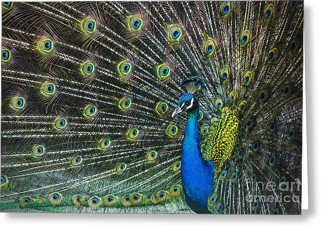 Parmi Greeting Cards - Glamour Greeting Card by Andrew Paranavitana