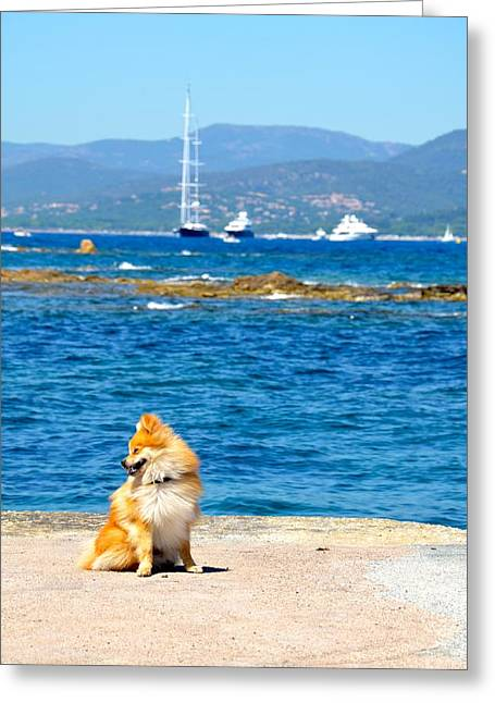 St.tropez Greeting Cards - Glamour Shot Greeting Card by Corinne Rhode