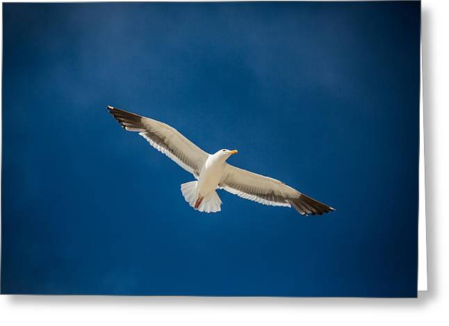 Mike Lee Greeting Cards - Glide Greeting Card by Mike Lee