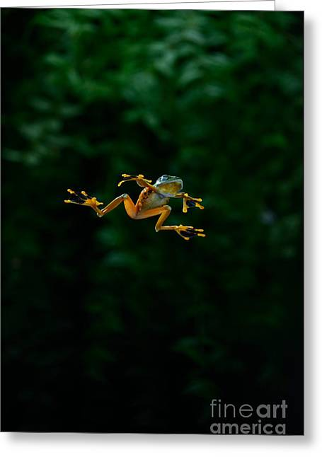 Recently Sold -  - Flying Frog Greeting Cards - Gliding Frog In Flights Greeting Card by Scott Linstead