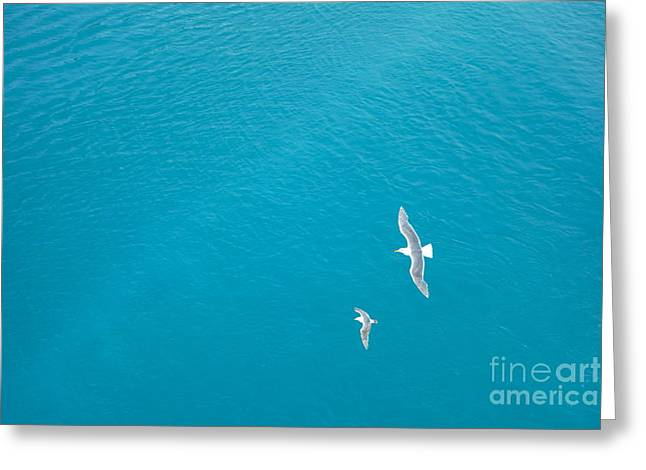 Gliding Seagulls Greeting Card by Jacqueline Athmann