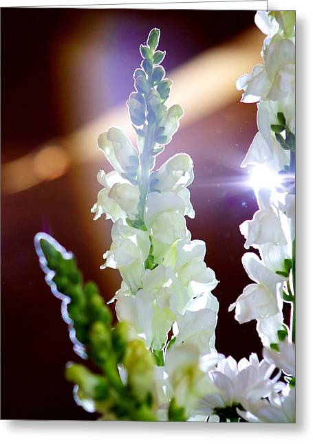 Jeremy Greeting Cards - Glimmering White Greeting Card by JM Photography