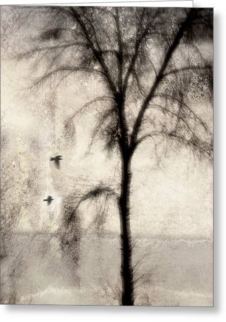 Rectangles Digital Art Greeting Cards - Glimpse of a Coastal Pine Greeting Card by Carol Leigh