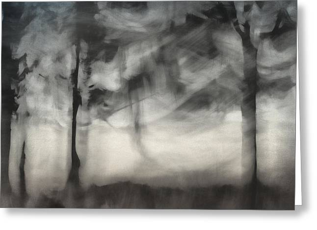 Mystical Landscape Greeting Cards - Glimpse of Coastal Pines Greeting Card by Carol Leigh
