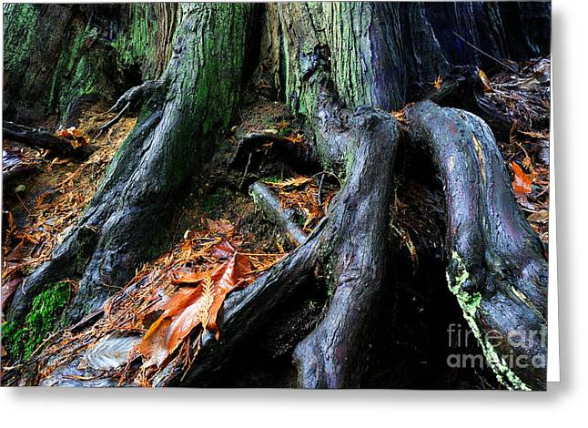 Tree Roots Greeting Cards - Glistening Tree Roots Greeting Card by Terry Elniski