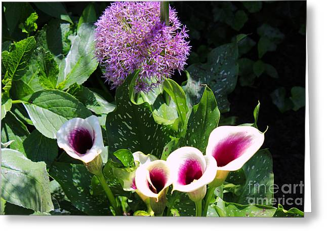 Purples Pyrography Greeting Cards - Globe thistle and Calla Lilies Greeting Card by Corey Ford