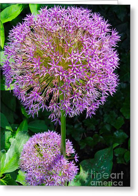 Purples Pyrography Greeting Cards - Globe thistle Flowers Greeting Card by Corey Ford