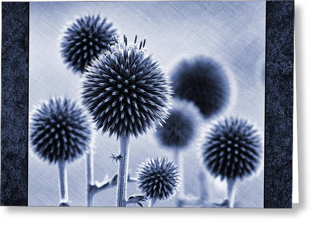 Blue Thistles Greeting Cards - Globe Thistles Greeting Card by Tim Gainey
